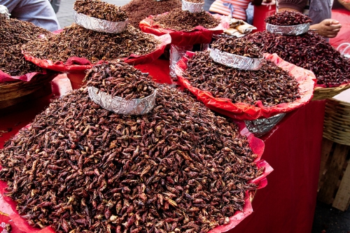 Chapulines on display at a Mexican market.  Photo:  William Neuheisel , CC BY 2.0