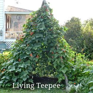 living teepee garden