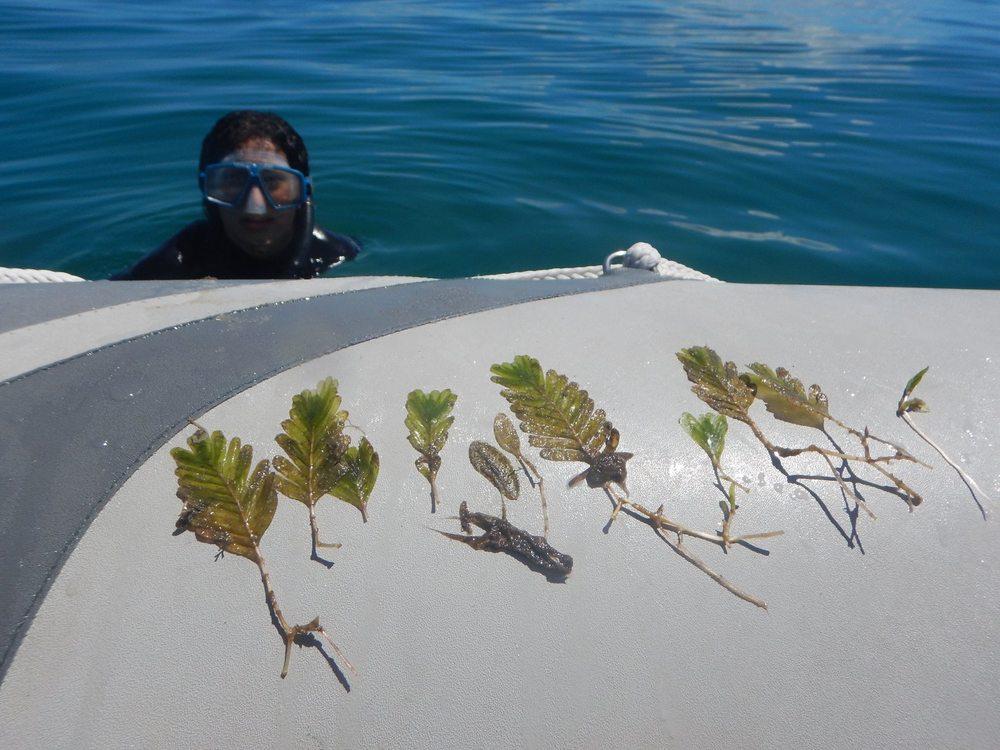 snorkeling3.jpg