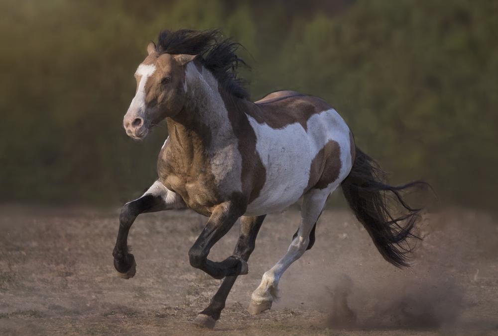 Tomahawk on the Run