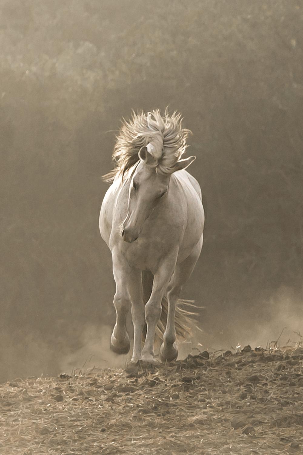 Grey mare on the run