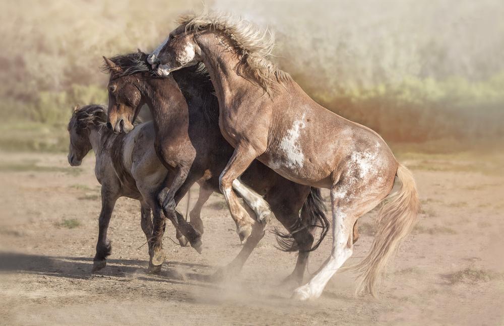Mustang Melee