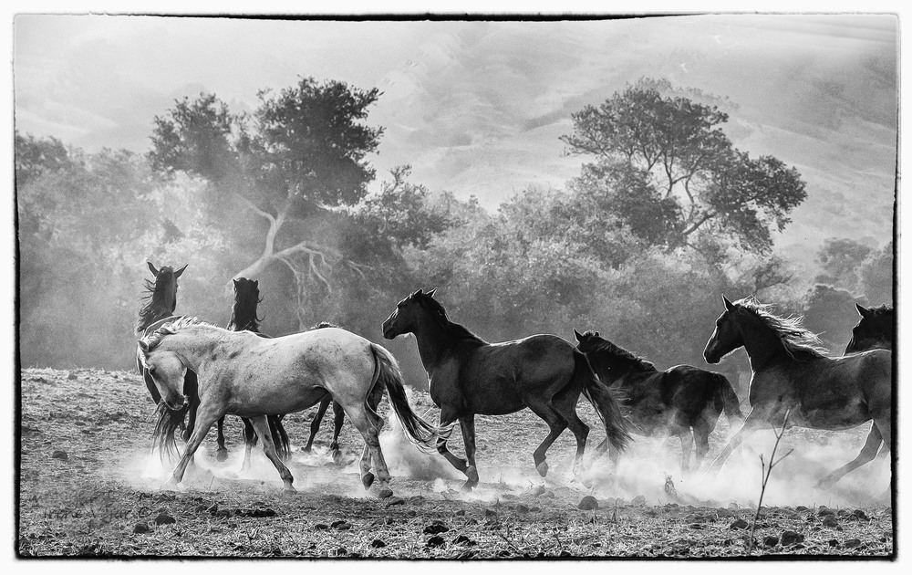 lead grey mare x.jpg