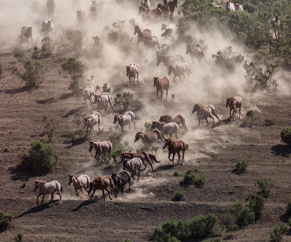 Release of the Herd