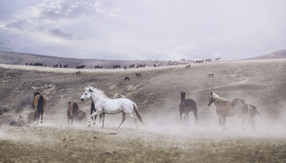 horses horses everywhere.jpg