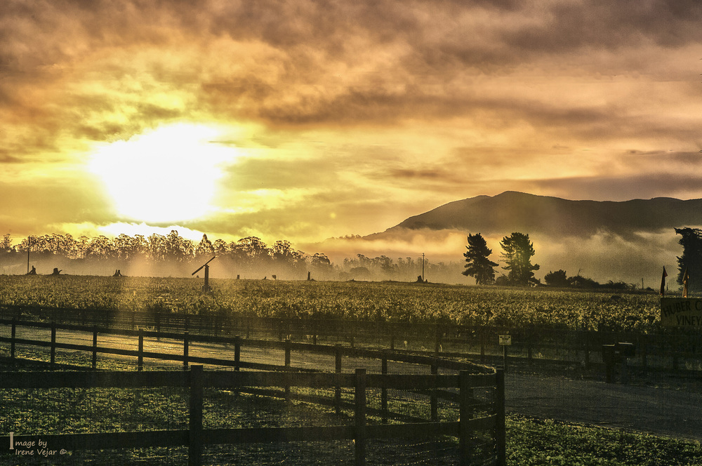 Vineyard sunrise - Hapgood road