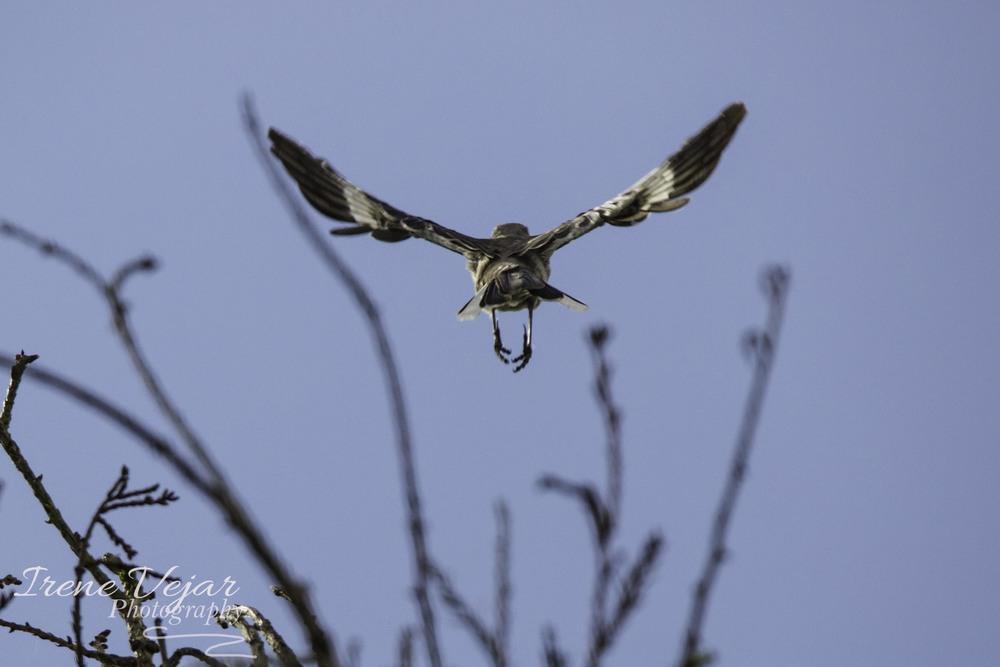 allelujah bird.jpg