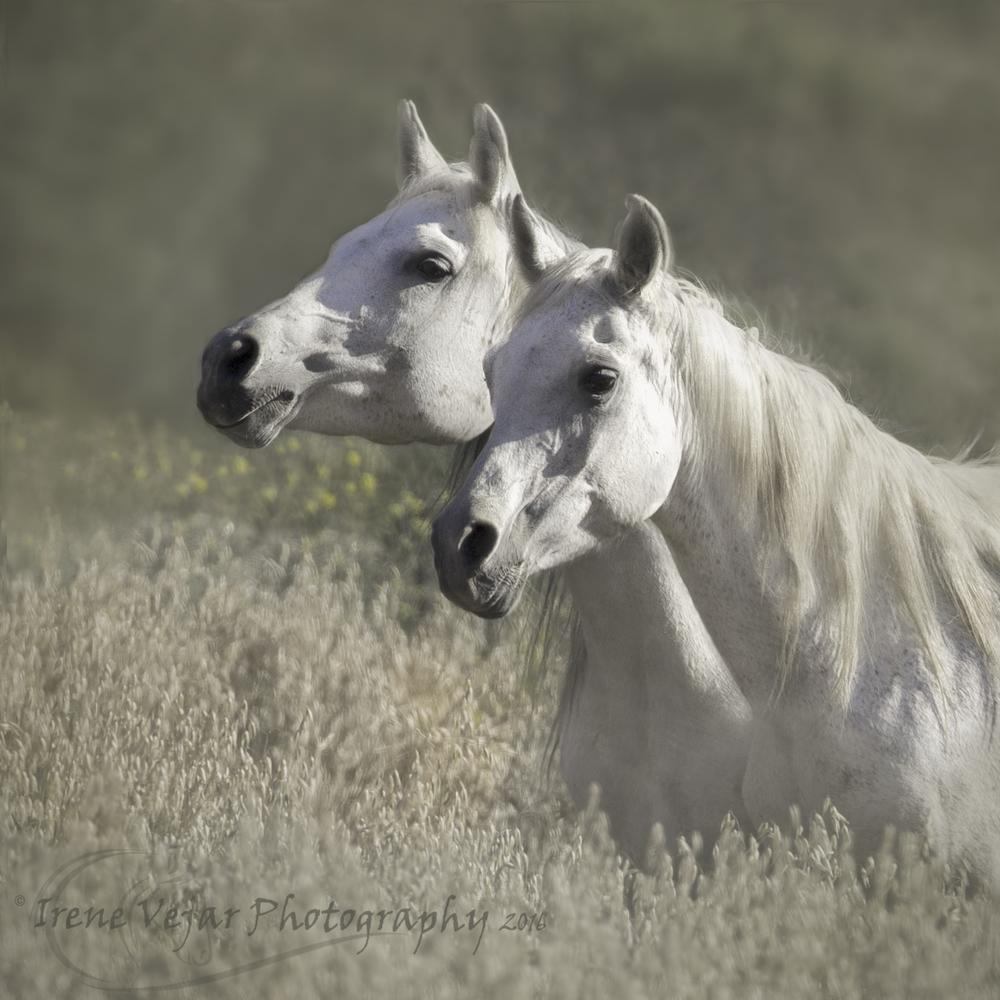 Pretty white duo.jpg