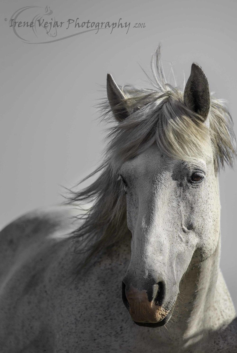 grey mare.jpg