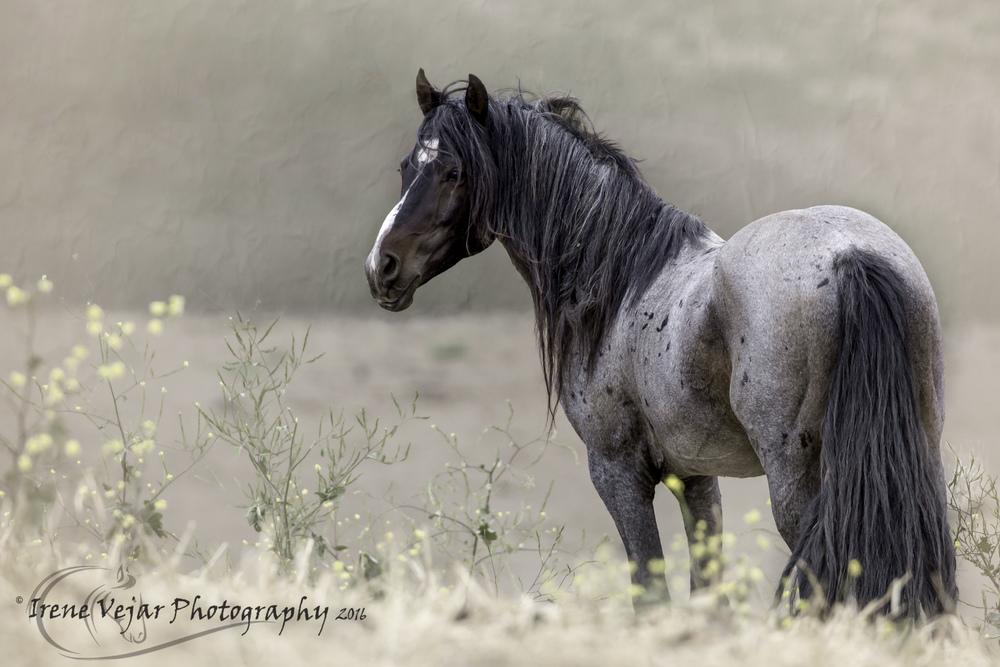 Stallions-036-2-Pretty Boy.jpg