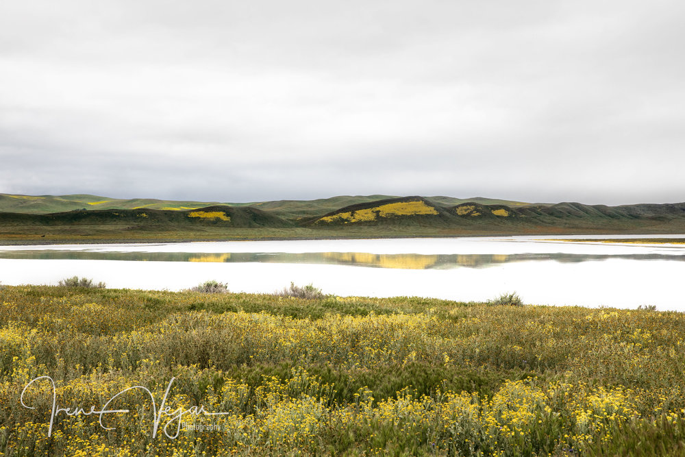 Soda Lake - Carrizo Plains 2017