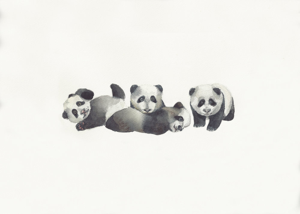 Peek_A_Boo_Pandas_Final.jpg