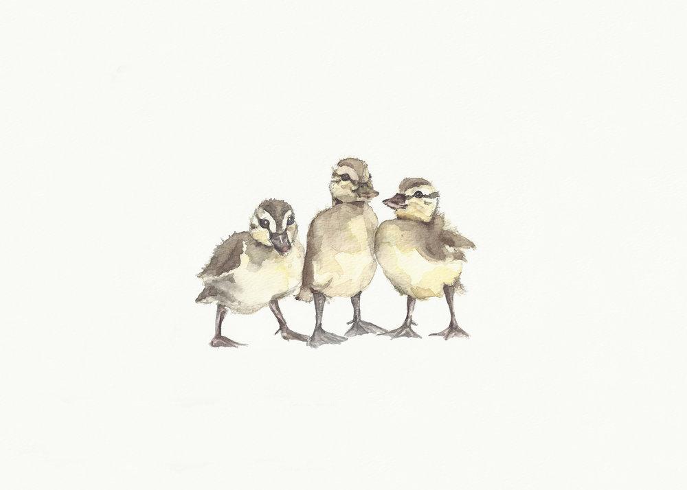 Ducks_in_a_Row_Final.jpg