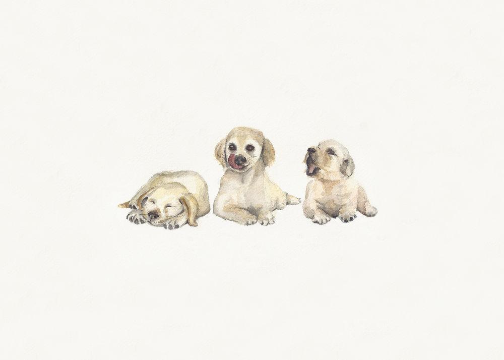 Puppy_Dog_Tails_Final.jpg