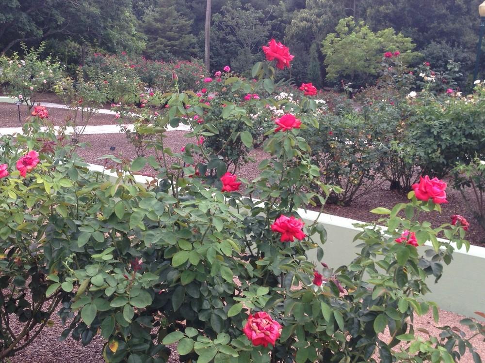 Rose-Garden-3.jpg