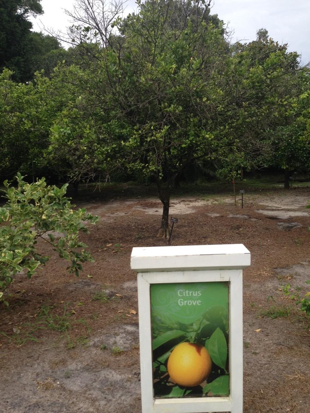 Citrus-Grove.jpg