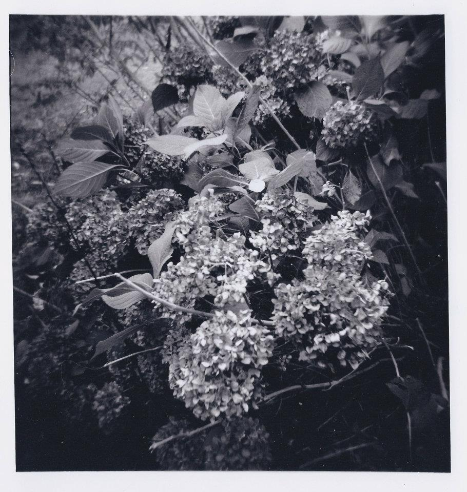 Black and White Film Photograph, 2011