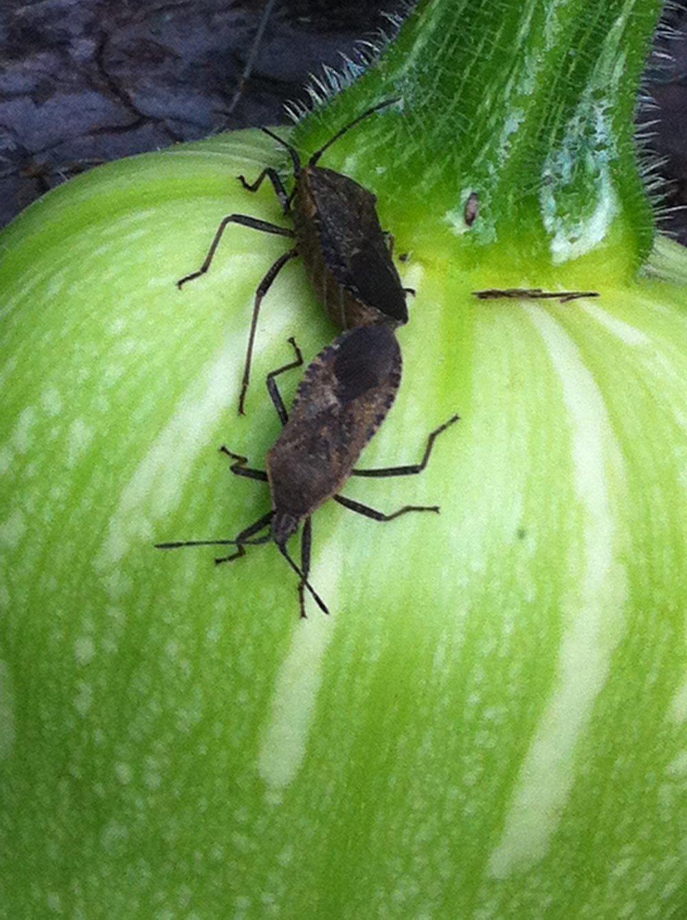 Pest & disease management