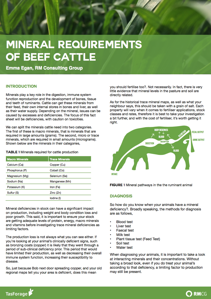 Mineral Requirements of Beef Cattle