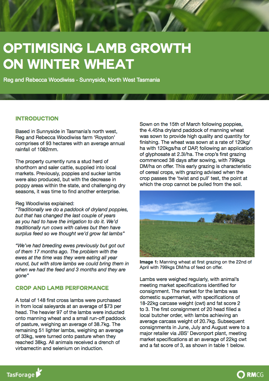 Optimising Lamb Growth on Winter Wheat