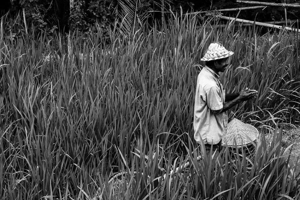 Local Balinese Man.jpg