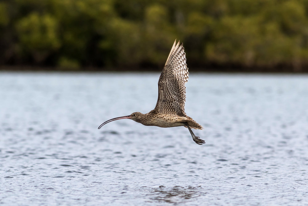 - BirdLife is calling on the Australian government to uphold its obligations under the Ramsar Convention and reject the current Toondah Harbour development proposal.