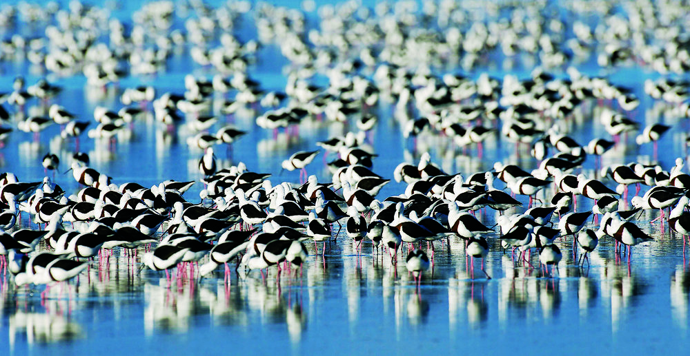 The Coorong and Lakes Alexandrina and Albert Wetland