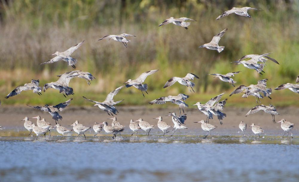 Pittwater-Orielton Lagoon