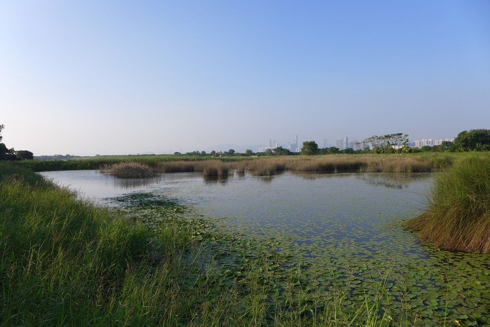 Mai Po Marshes and Inner Deep Bay