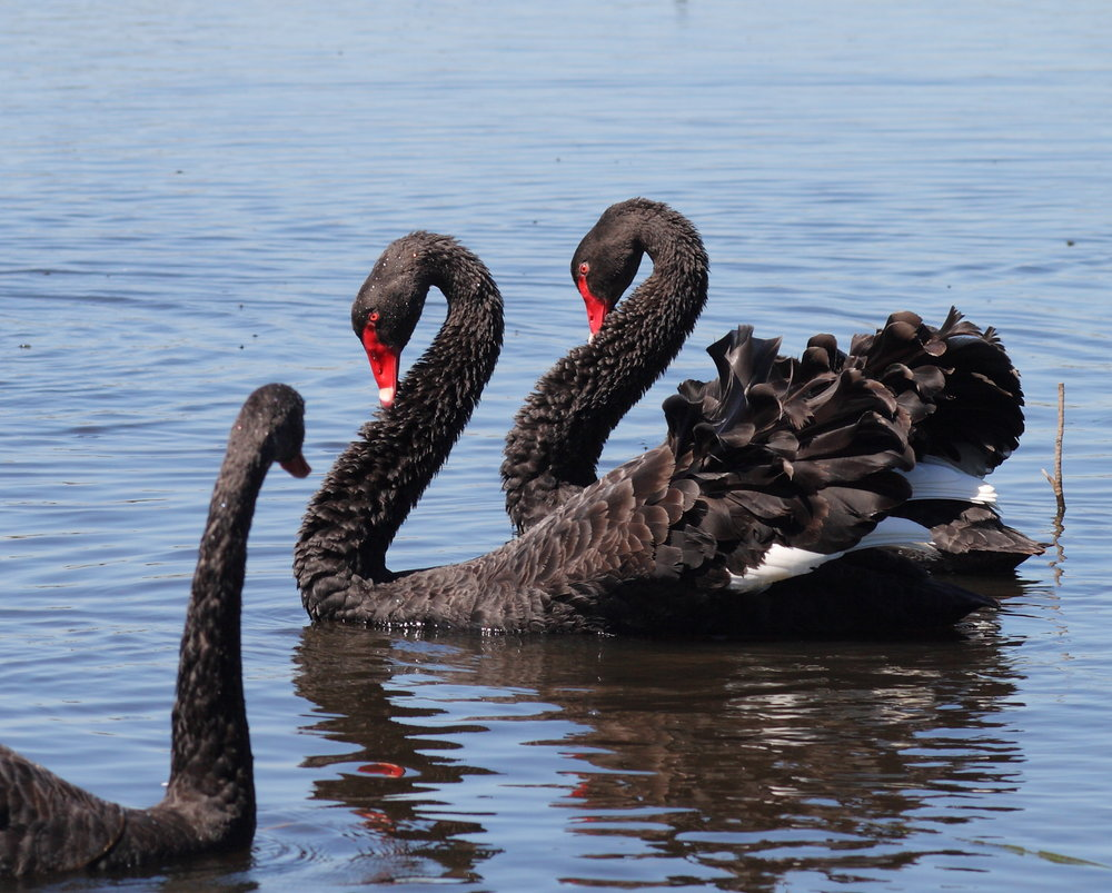 Moulting Lagoon