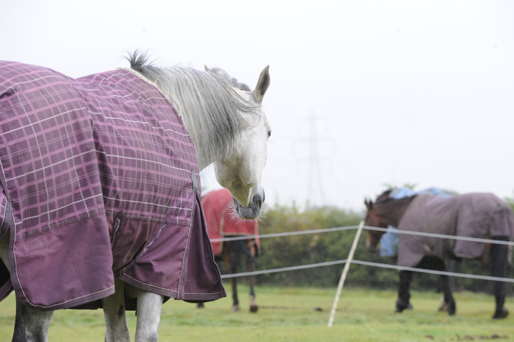 If when you move your horse you're worried about turning him out twith others, introduce them over the fence at first.
