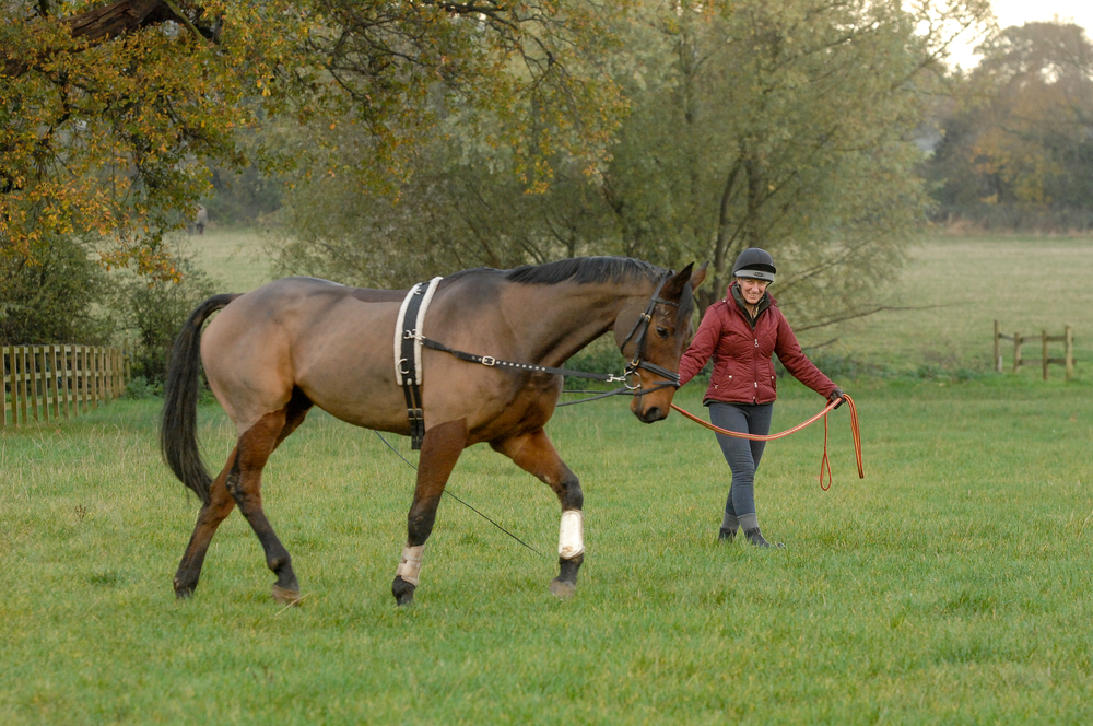Try lunging your horse in an open space so that being in it becomes less of an 'event. As a result he'll become more relaxed and therefore less excited.