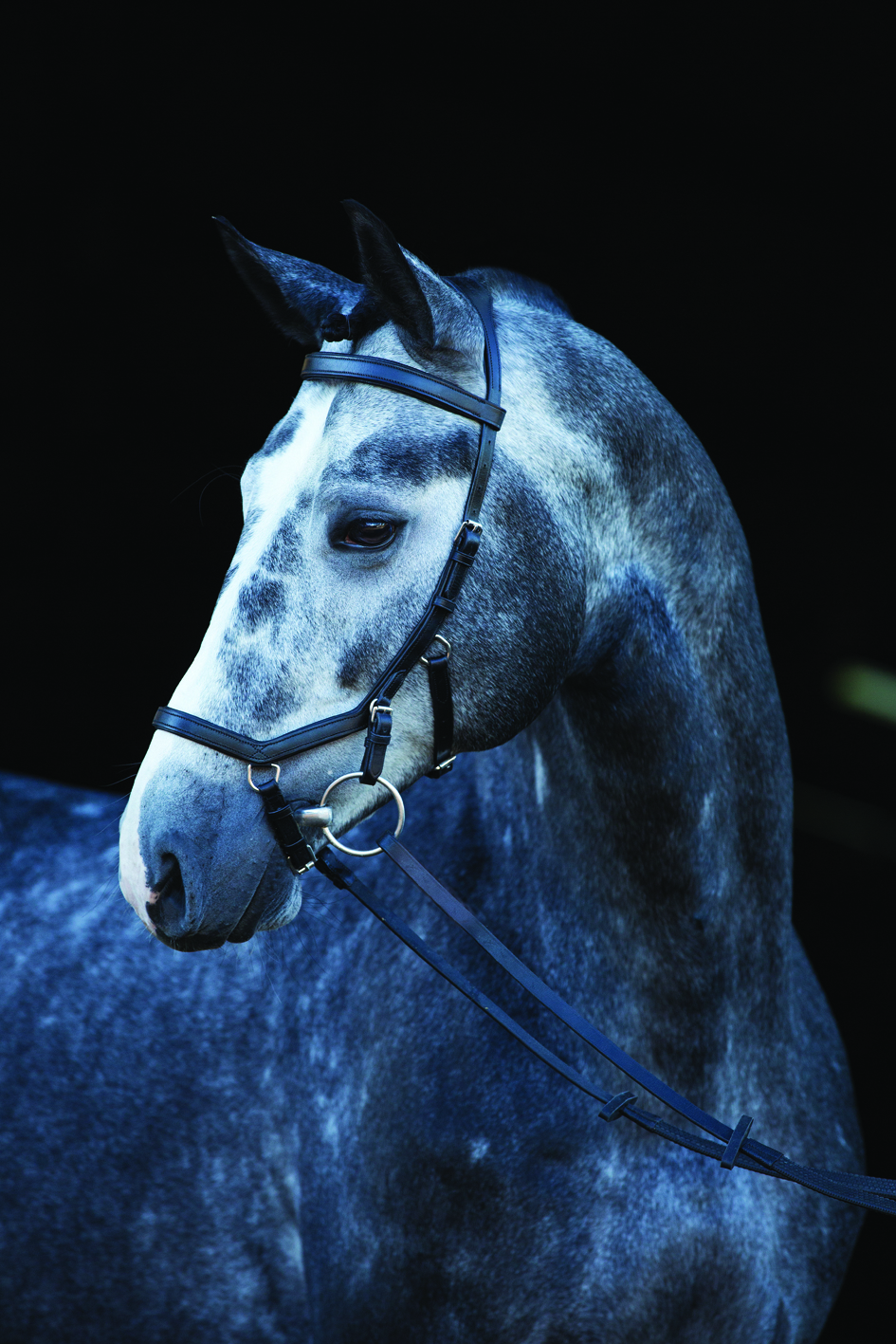 The Micklem Competition Bridle