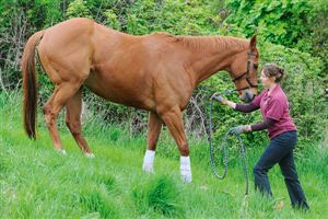 Equine pilates exercises can help to improve your horse's balance and mobility