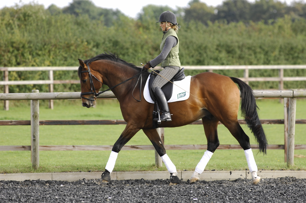 Using simple exercises you can improve your horse's paces