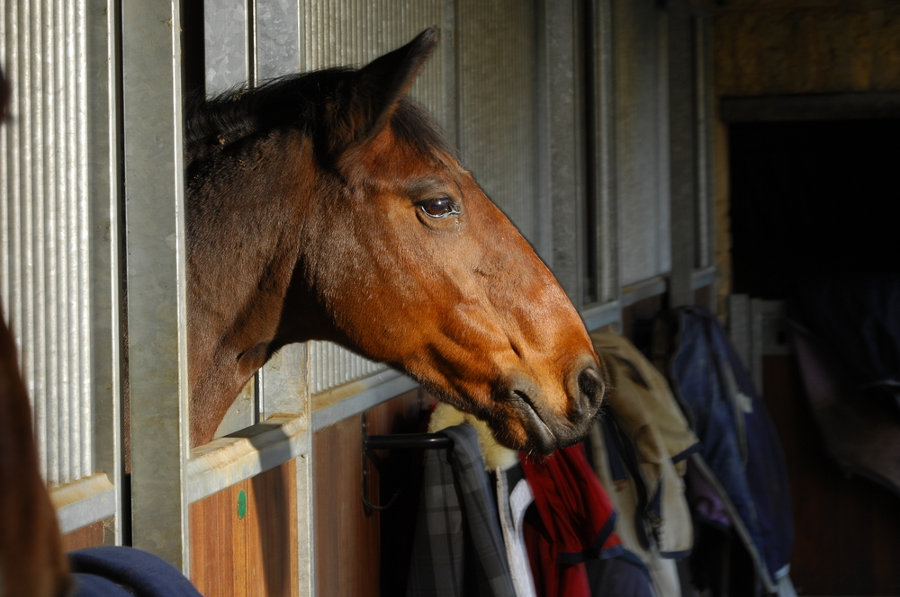 Are 'equine myths' putting the health of our horses at risk?