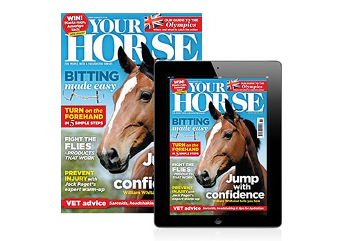 Your Horse print and digital image