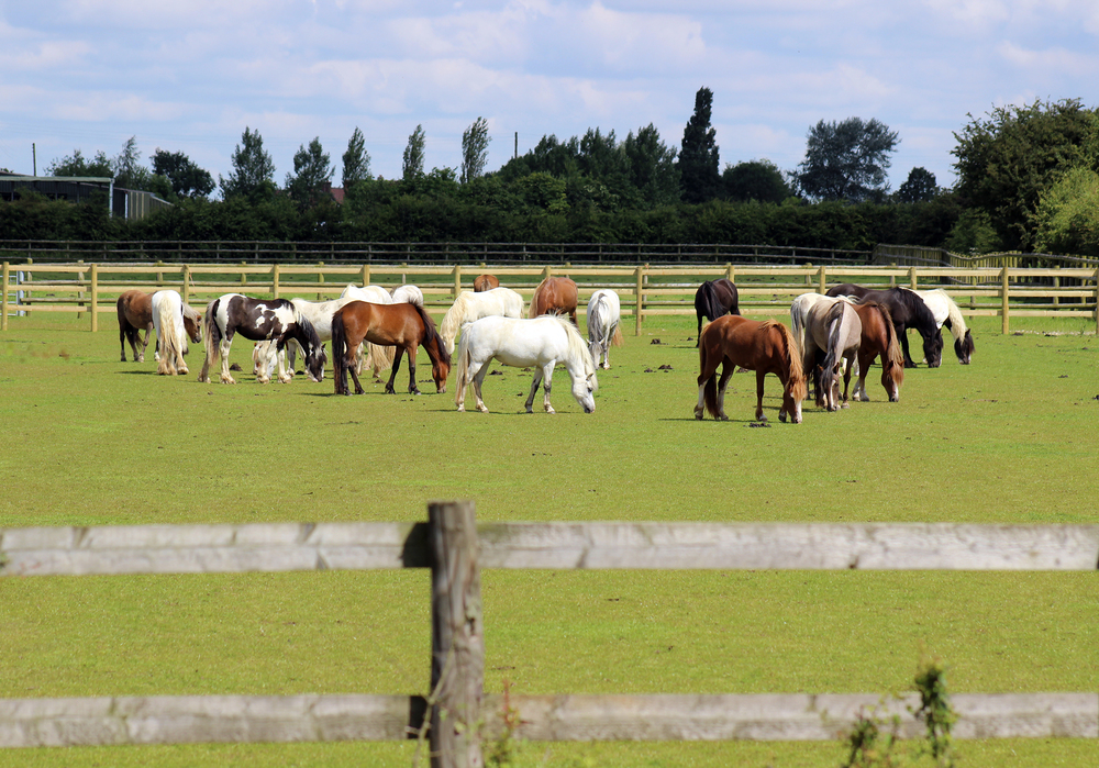 Bransby Horses welfare centres have never seen as many equine cases