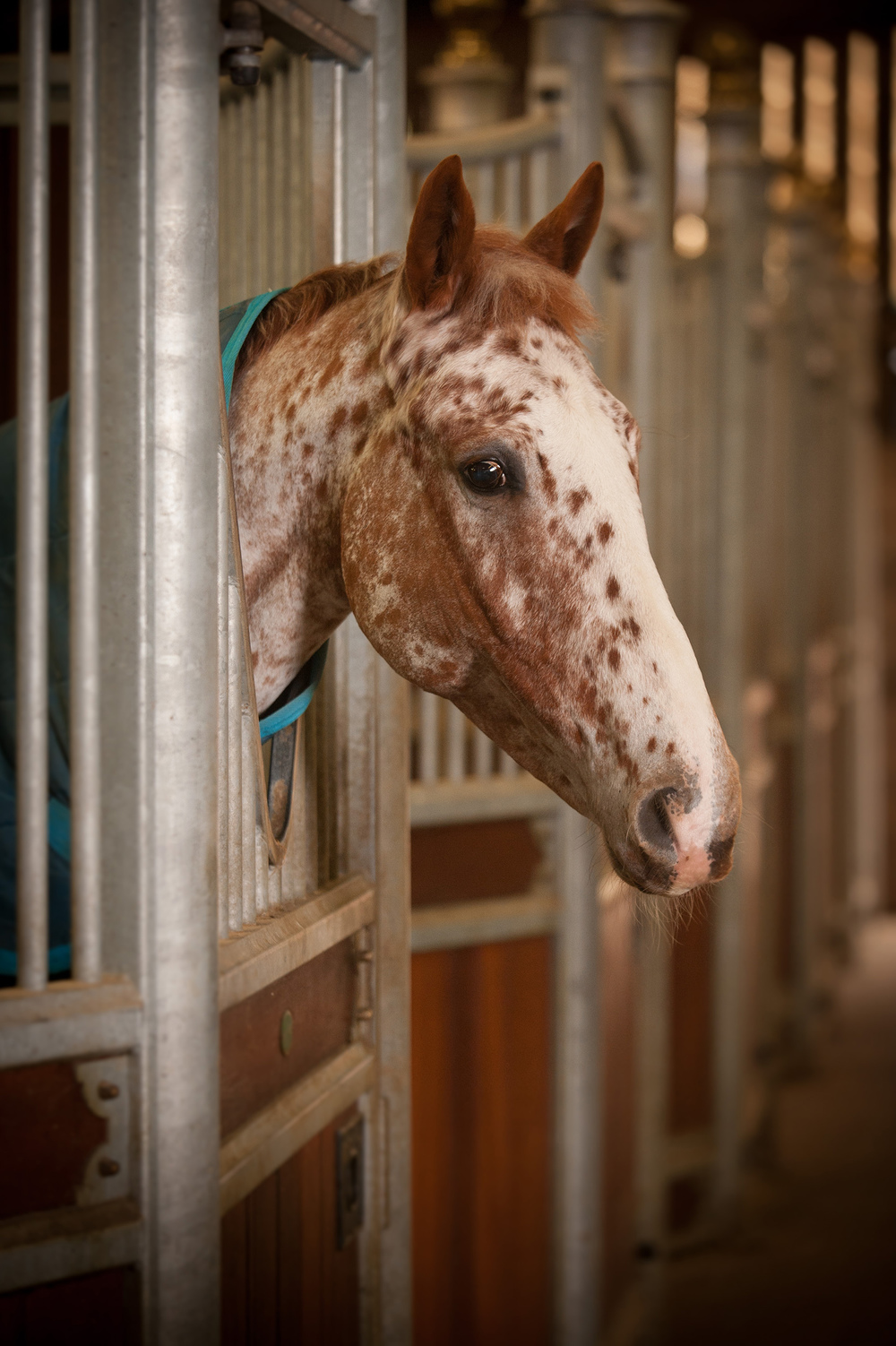 Working livery at Hartpury College could be a good solution for you and your horse.