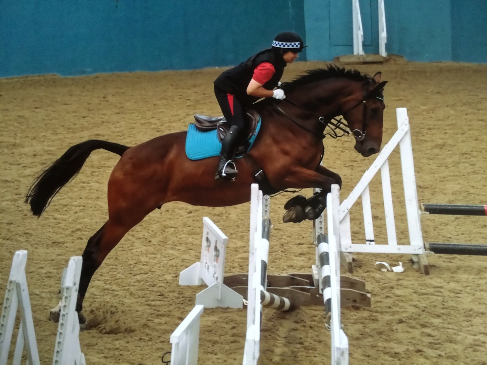 Susi continues to compete in dressage and show jumping classes.