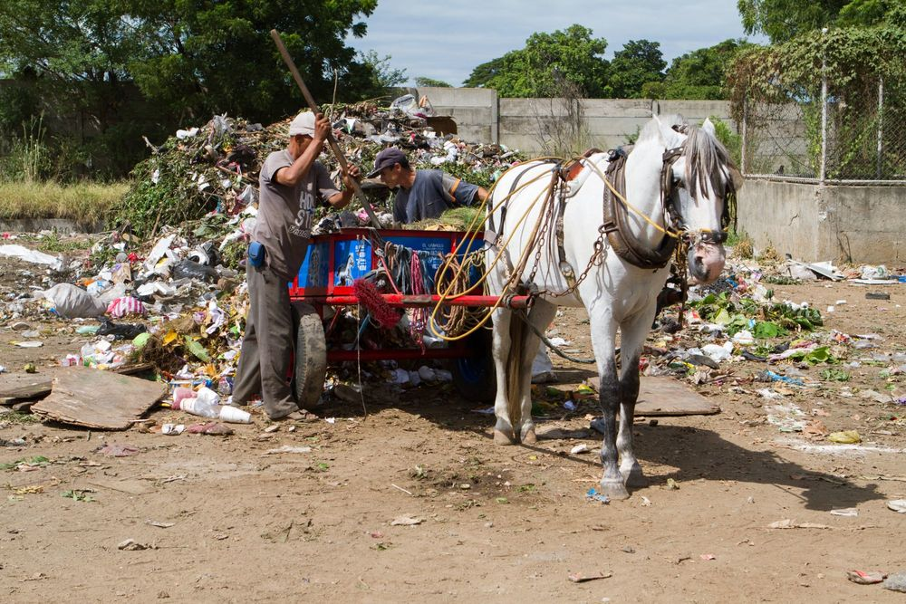 A horse working on a rubbish dump in Nicaragua