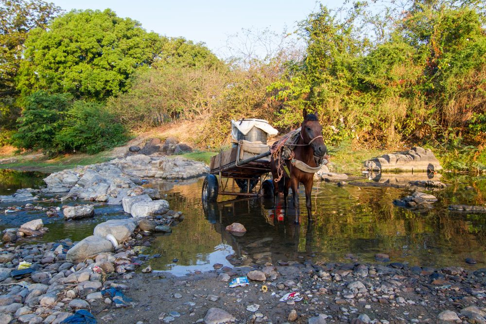 A horse collecting water in Honduras