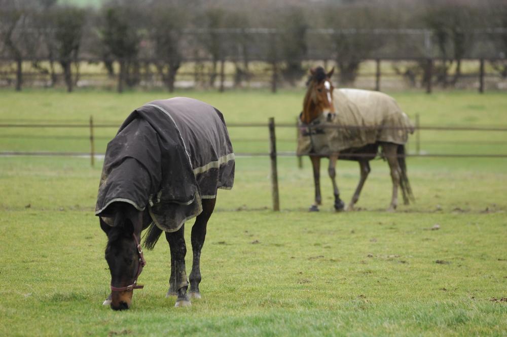 rugged horses