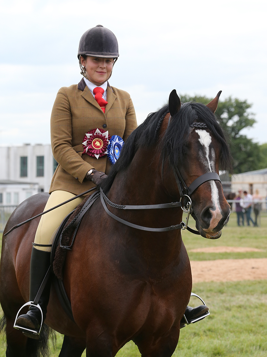 Michaela Wood riding stallion Swchyrhafod Brenin (credit: 1st Class Images)