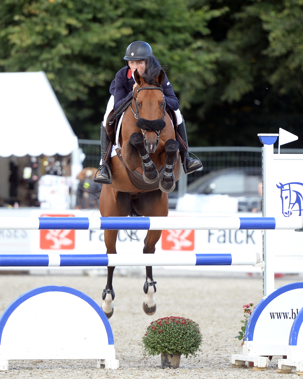 Jack Whitaker with Elando Van De Roshoeve wins individual gold at the FEI Pony European Championships 2016 (Credit: British Showjumping)