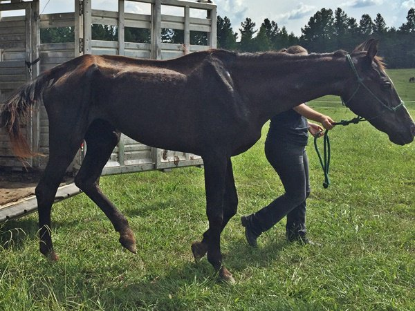 Smoke got to spend her final days in a lush green pen (Photo: Horse Plus Humane Society)