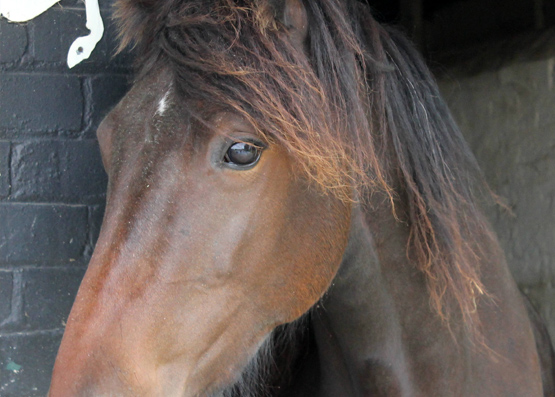 Lulu went into the care of the Essex Horse and Pony Protection Society in 2013 and will soon be looking for a foster home