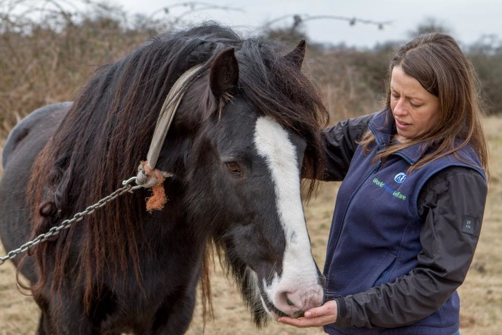World Horse Welfare Chief Field Officer, Claire Gordon