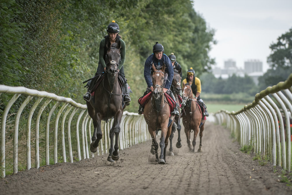 One of the eight horses, Coilltte Lass, leads the way in training