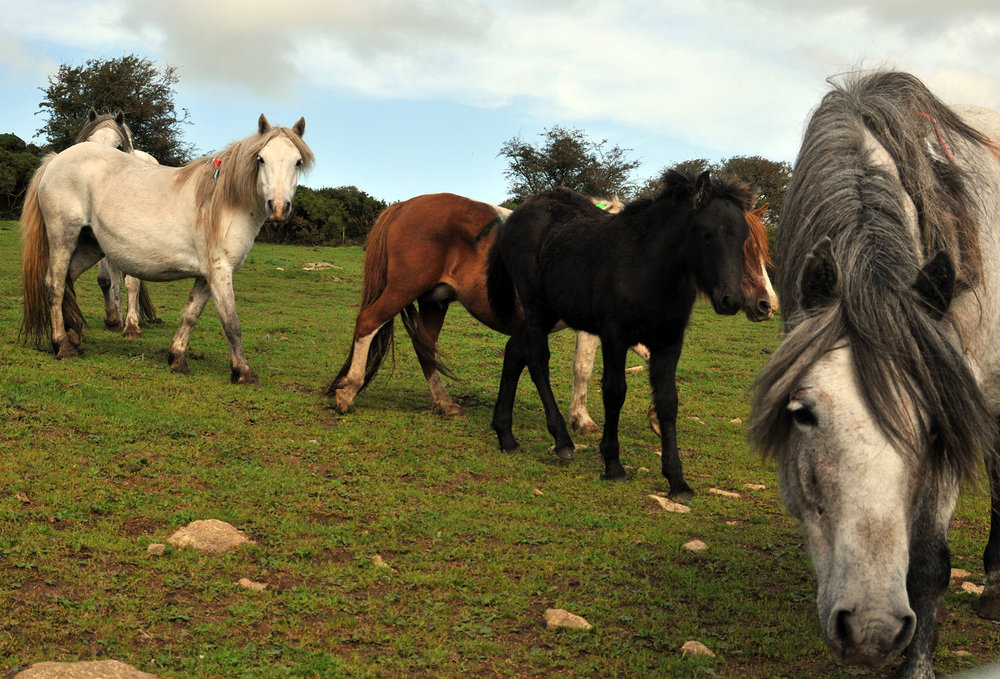 Ponies from Bodmin Moor (Pic: Redwings Horse Sanctuary)